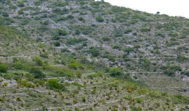 14 hectáreas forestales diarias en riesgo de pérdida en Puebla